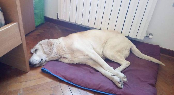 Come a casa, dog sitter a Padova