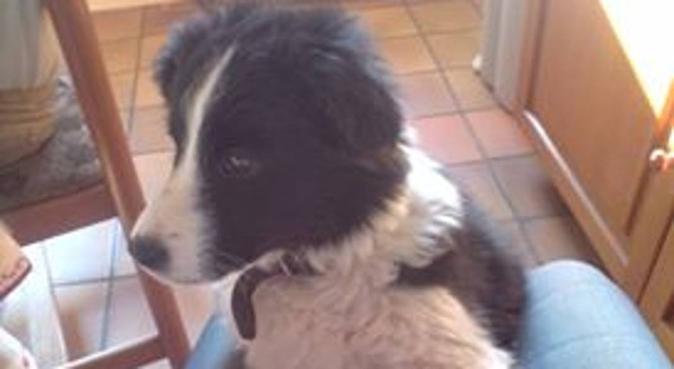 Promenade et garde au domicile dès propriétaire, dog sitter à Tourcoing