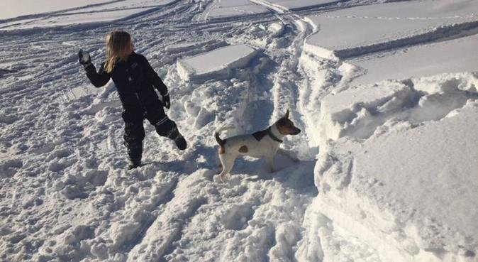 Promenader och hundpassning, hundvakt nära Uppsala