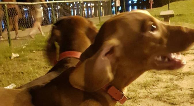Un ami brésilien temporaire pour ton chien, dog sitter à Marseille, France