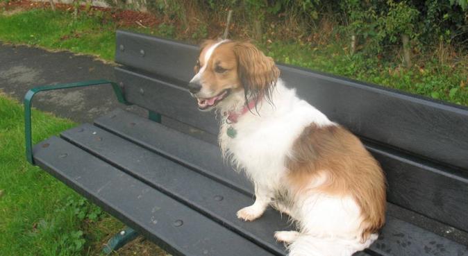 Trev's dog boarding, dog sitter in Brighton