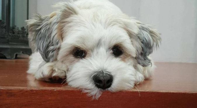 Omsorgsfull hundpassning, hundvakt nära Lilla Edet