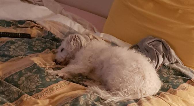 Tanto divertimento e felicità !!, dog sitter a Rastignano