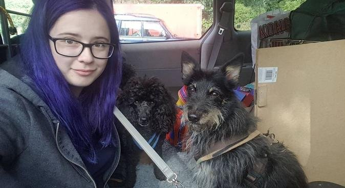 CB1 Dog walking from an Animal Behaviour student!, dog sitter in Cambridge