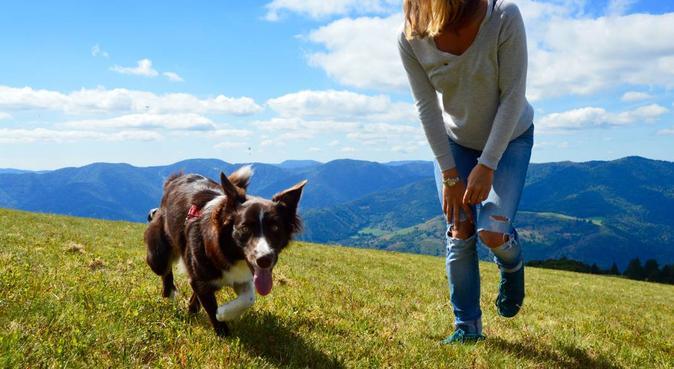 À la recherche d'un petit compagnon à garder !, dog sitter à Strasbourg