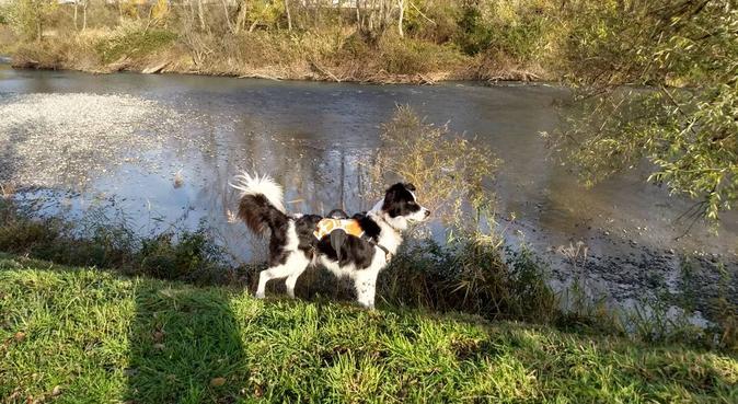 Longues promenades et jeux au bord du Drac, dog sitter à FONTAINE