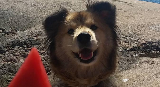 Hundälskande student i Majorna, hundvakt nära Göteborg