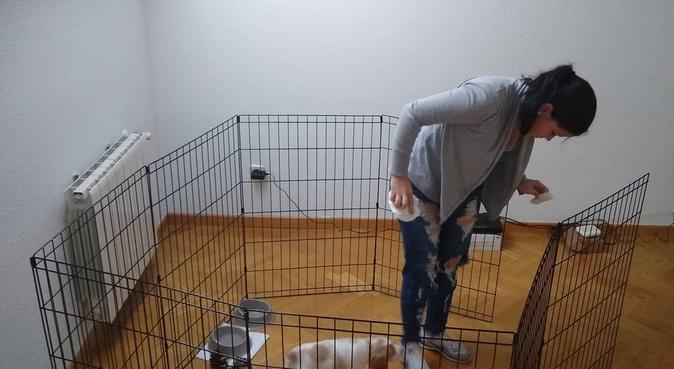 Cuídare de tu perro como si fuera el mio, canguro en San Sebastián de los Reyes, España