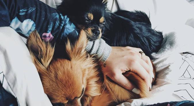 Liefdevol dagje voor je liefste viervoeter, hondenoppas in Den Haag