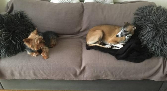 Toutous heureux !!!, dog sitter à Reims