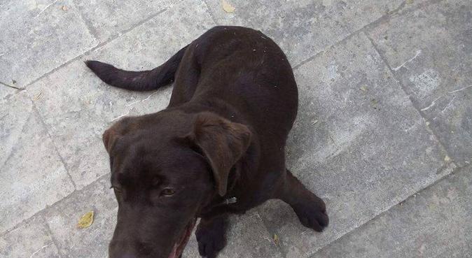 Nounou d'enfer !, dog sitter à Marseille