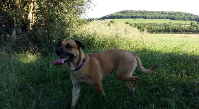 Friandises, calinous, et promenade à Dijon, dog sitter à Dijon