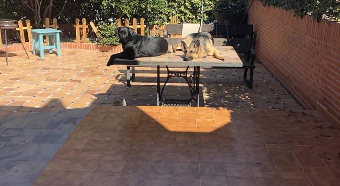 Días inolvidables para tu perrete, canguro en Parla, España