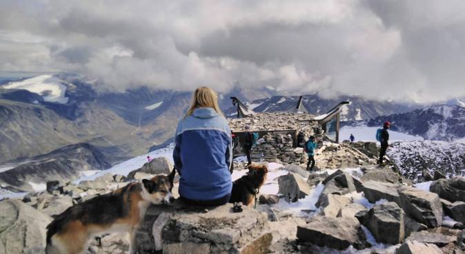 Hei og hå ut å gå samma vær, hundepassere i Trondheim