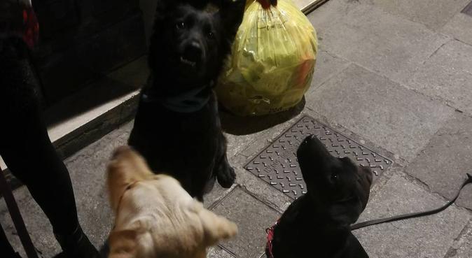 Coccole, passeggiate e tanto divertimento con noi, dog sitter a Parma