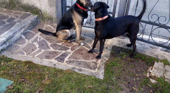 Amo i cani come se fossero i miei figli, Hundesitter in Bardolino, VR, Italia