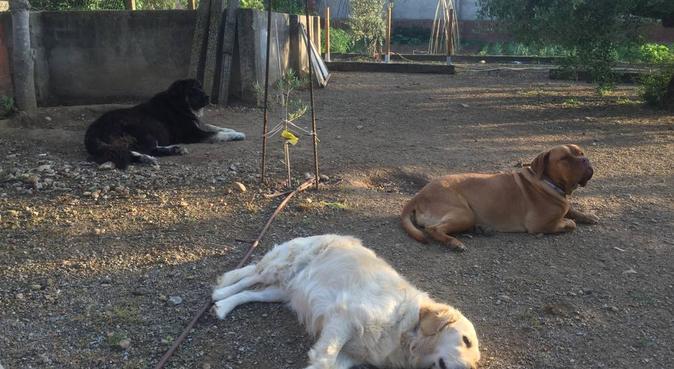 Paraiso para tu mascota ., canguro en Figueras