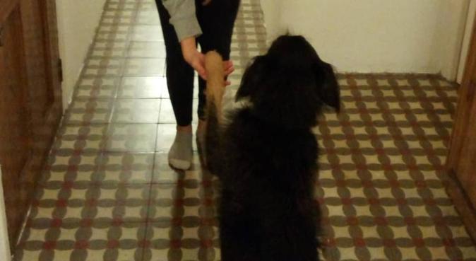 Un segundo hogar para tu perruni, canguro en Barcelona