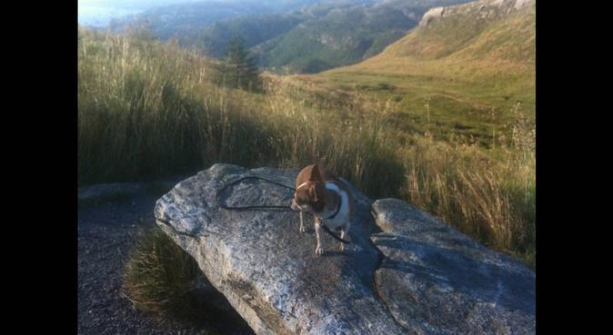 Hundens beste venn! Kos og turer igjen og igjen :D, hundepassere i Bergen