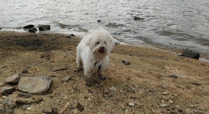 Campamento para perros, canguro en Navalcarnero