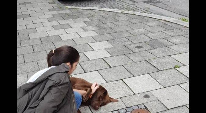 Ich werde mich um Ihren Hund kümmern, wie meine., Hundesitter in Rhein-Pfalz-Kreis, Alemania
