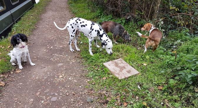 Very experienced dog walker in Watford, dog sitter in Rickmansworth