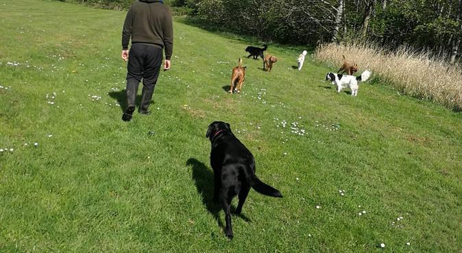 Doggy Holiday, dog sitter in Hamilton, UK