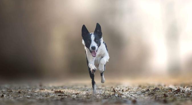 Erfaren och kärleksfull dogbuddy i Uppsala!, hundvakt nära Uppsala
