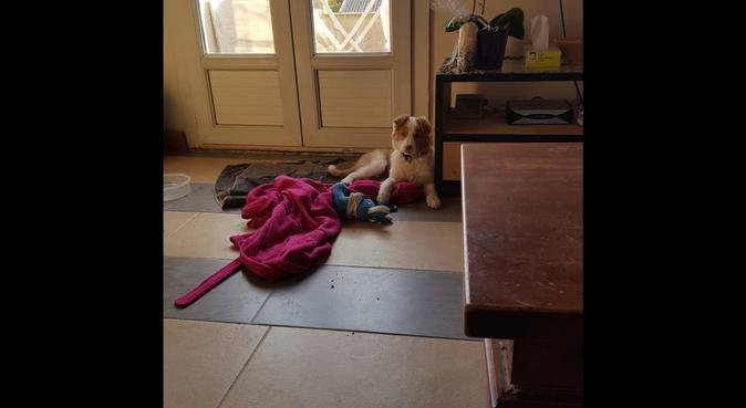 Des animaux et des amis, dog sitter in La Bouilladisse