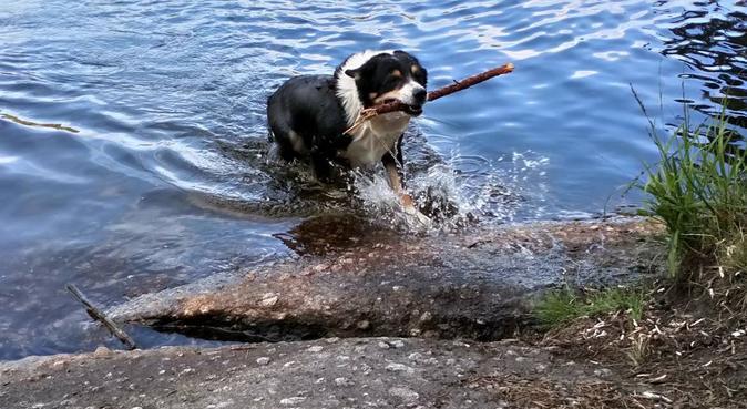 Aktiv hundpassning i Bergsjön 🐾, hundvakt nära Göteborg