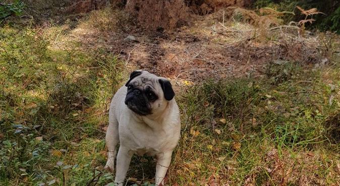 Kärleksfull hundpassning, hundvakt nära Södertälje