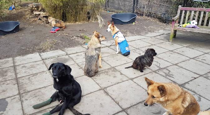 Grote dierenvriend, hondenoppas in Almere