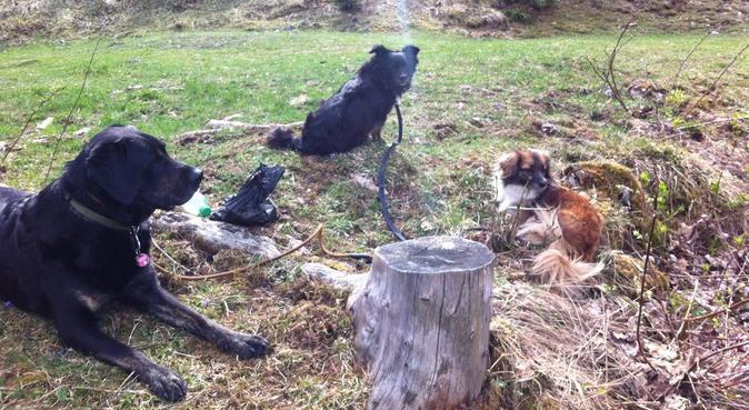 Hundeurlaubsbetreuung im Paradies in Schliersee, Hundesitter in Schliersee, Deutschland