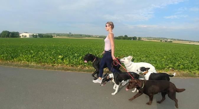 Dogwalker - Rudeln mit Leidenschaft, Hundesitter in Mainz