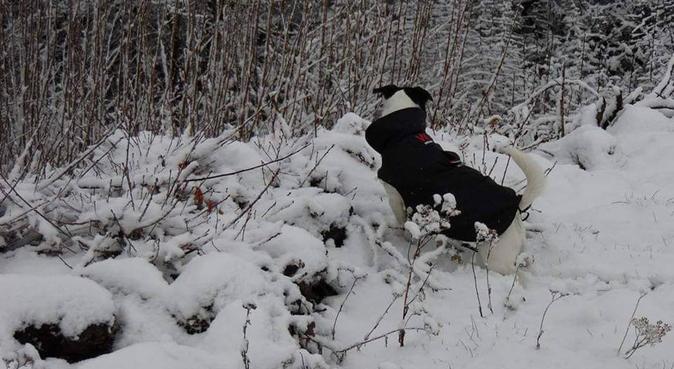 La promeuneuse de rêve 😁😊, dog sitter à Andrésy, France