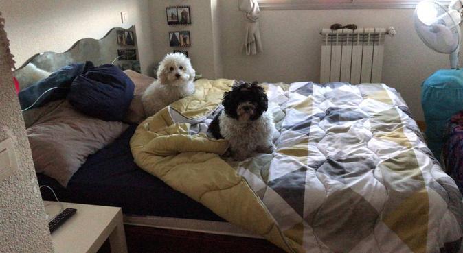 El mejor hogar para tu doggie, canguro en Madrid