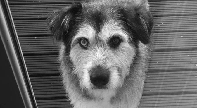 Viens avec moi te promener !, dog sitter à Paris, France