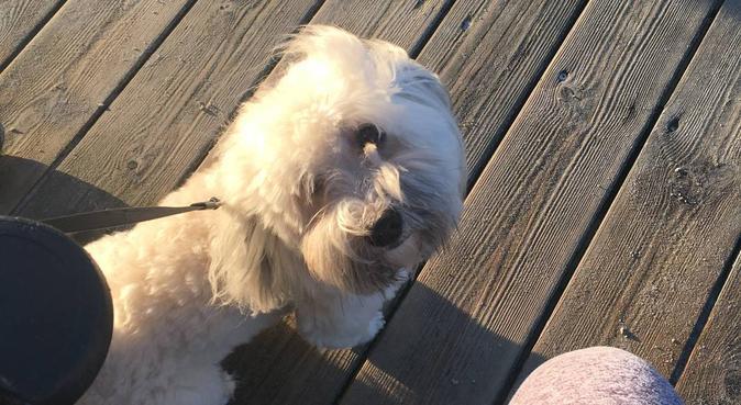 Kärleksfull hundpassning på Näset och Malmö, hundvakt nära Höllviken