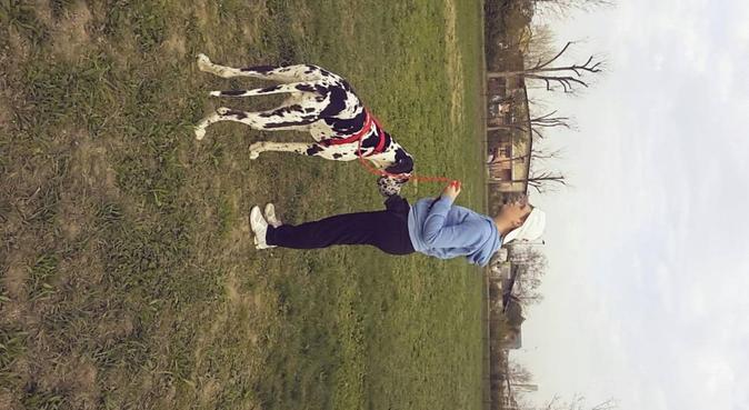 Passeggiate per i cani con un'amante degli animali, dog sitter a MILANO