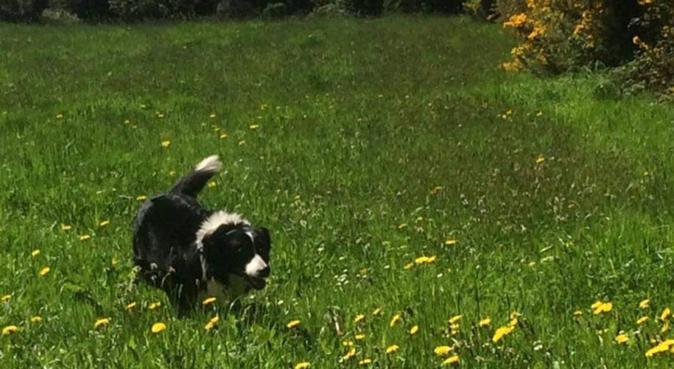 Chiswick walks & daycare, dog sitter in London, UK