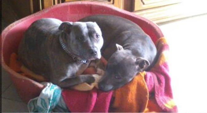 Les chiens ne font pas des chats mais les aiment, dog sitter à Dijon