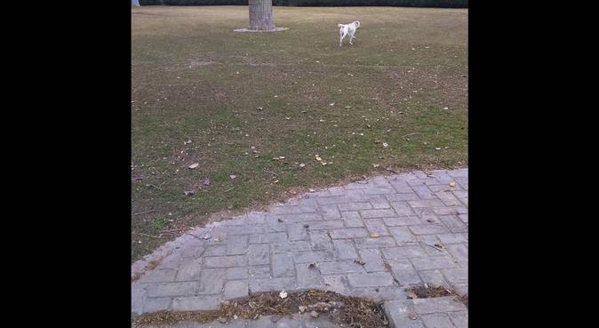 Lugar perfecto para pasear perros, canguro en Sevilla