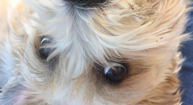 Famille d'acceuil pour chiens et chats., dog sitter à Bordeaux, France