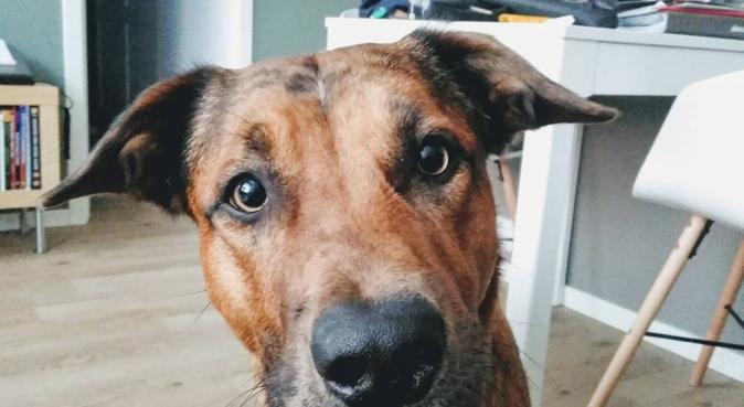 Kom på playdate med vår Buddy! :), hundepassere i OSLO