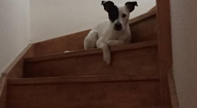 Votre chien ne s'ennuira pas sans vous, dog sitter à Metz