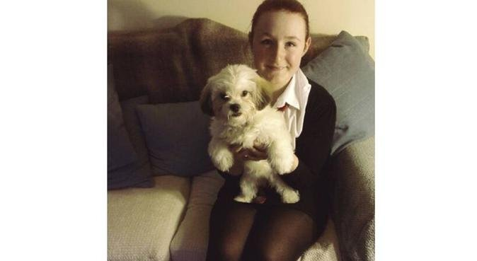 Furry friend needed for walking partner, dog sitter in Cardiff