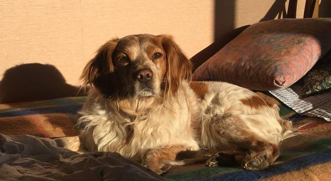 Comme à la maison..., dog sitter à Lyon