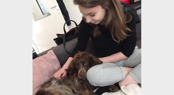 Dog sitter pour vos petites boules de poils, dog sitter à Amiens