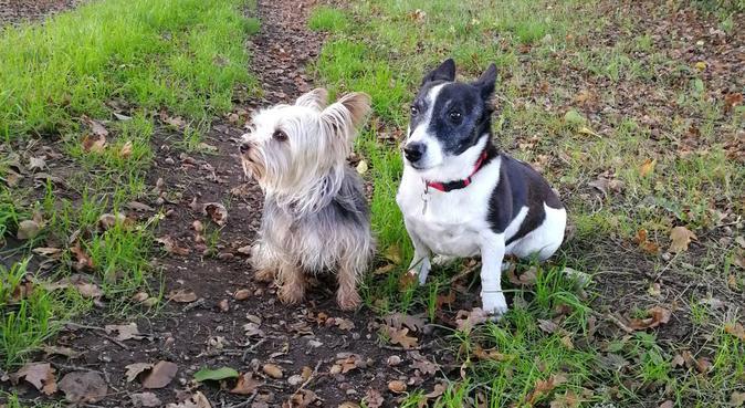 Garde de chiens pendant tout l'été, dog sitter à Vezin Le Coquet