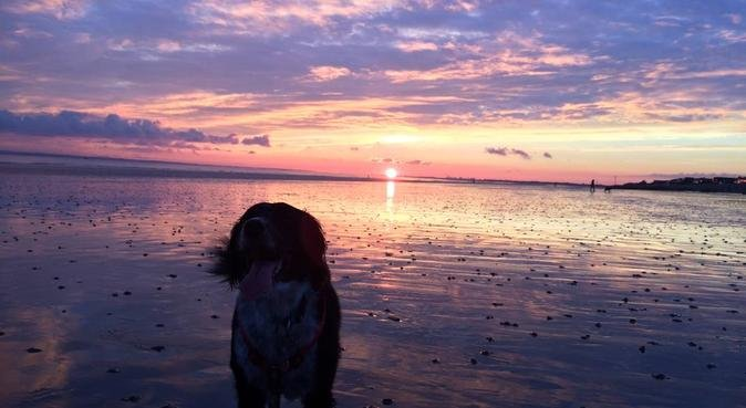 Daisy's Dogs, dog sitter in Chichester, UK